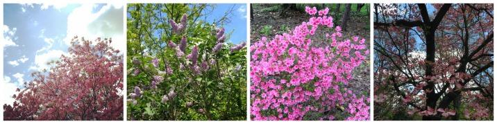 spring va pink